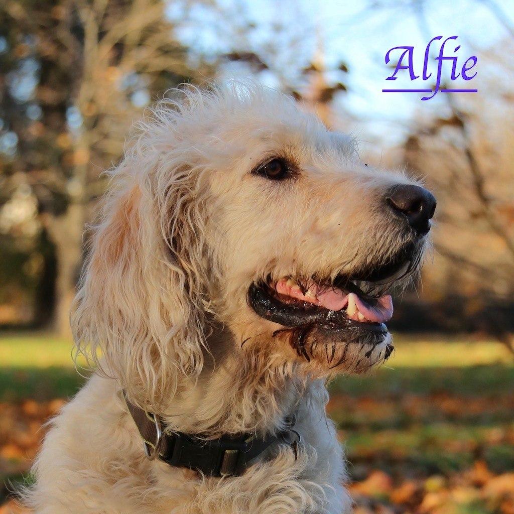 Alfie with Kensington Gardens dog walkers, Agnes & Pavel
