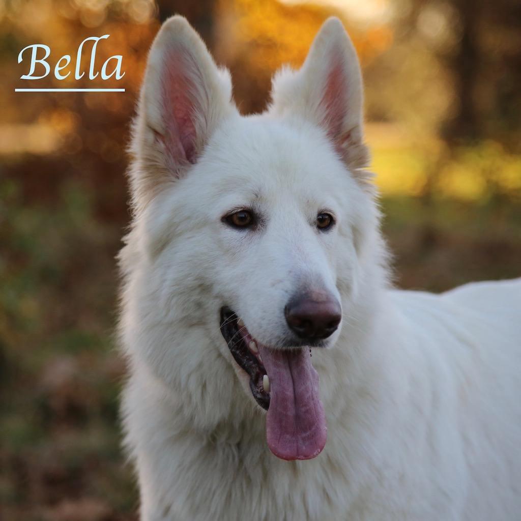Bella with Kensington Gardens dog walkers, Agnes & Pavel