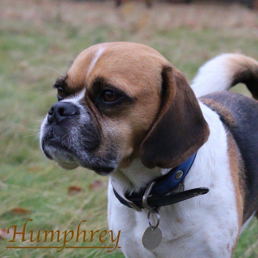 Humphrey with Kensington Gardens dog walkers, Agnes & Pavel