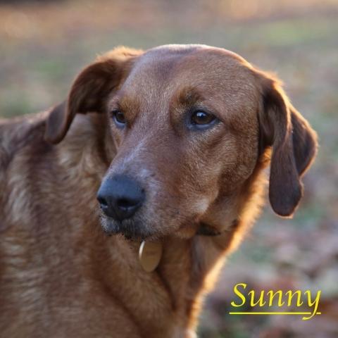 Sunny with Kensington Gardens dog walkers, Agnes & Pavel