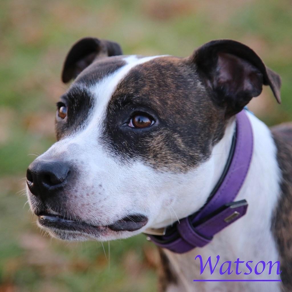 Watson with Kensington Gardens dog walkers, Agnes & Pavel